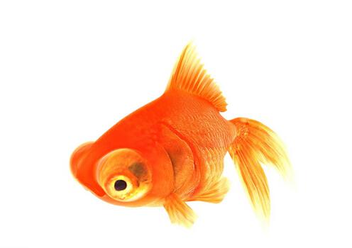 办公室养鱼风水