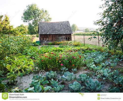 庭院风水——植物也很有讲究